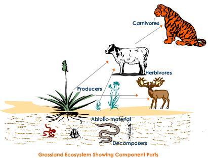 Contoh Komponen biotik ekosistem