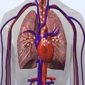 Gangguan-Kelainan-Sistem-Peredaran-Darah-300x300