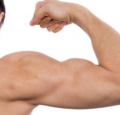 Pengertian Otot antagonis