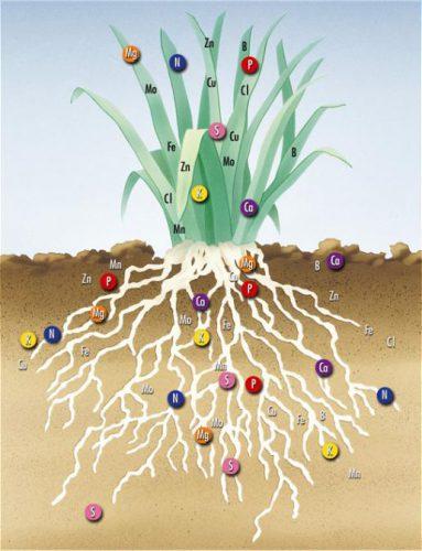 Perbedaan antara Makronutrient dan Mikronutrien