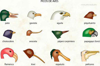 paruh burung