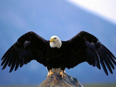 sayap burung