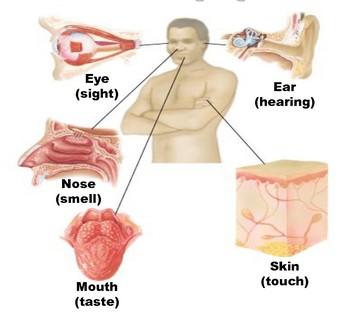 Gangguan dan Penyakit pada Sistem Indra