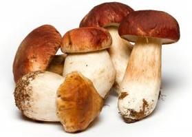 Jamur menggunakan pencernaan ekstraseluler