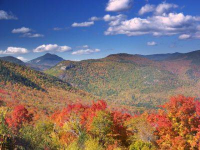 Pengertian Ekosistem Darat