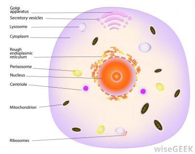 Pengertian protoplasma
