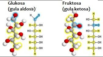 Perbedaan Glukosa dan Fruktosa
