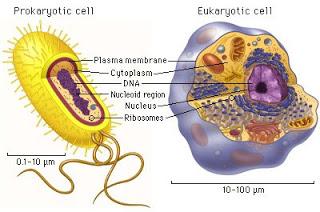 Perbedaan antara Nukleus dan Nukleoid