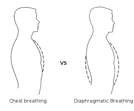 Pernapasan perut dan Pernapasan dada