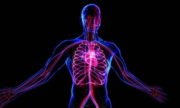 apa itu aorta