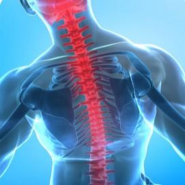 tulang punggung