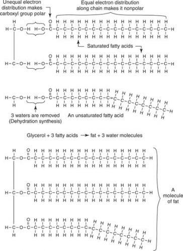 molekul lemak
