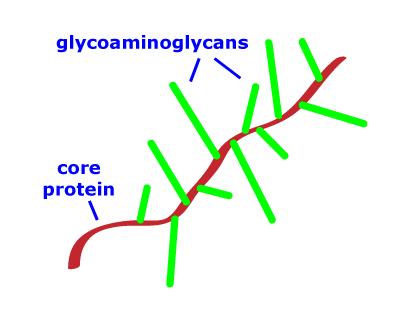 Pengertian Proteoglikan
