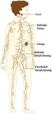 Apakah Fungsi Sistem limfatik