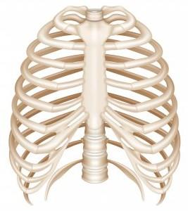 tulang dada