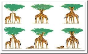 Evolusi populasi di bumi