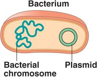 Pengertian plasmid