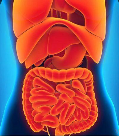 organ-tubuh