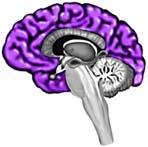 otak besar
