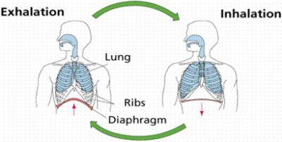 Inhalasi dan Ekshalasi