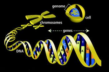 Perbedaan Gen dan Genom