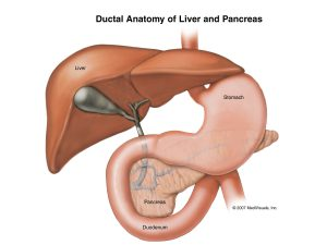 Perbedaan antara hati dan Pankreas