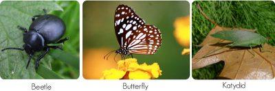 sayap serangga