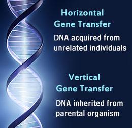 Perbedaan transfer Gen Horizontal dan Vertikal