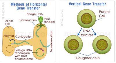 diagram transfer Gen Horizontal dan Vertikal