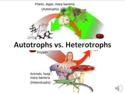 Perbedaan Antara organisme Autotrof dan Heterotrof