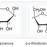 struktur ribosa
