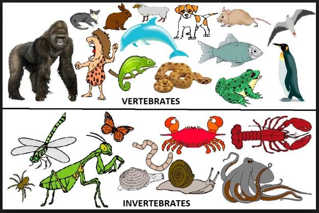 Perbedaan Antara Vertebrata Dan Invertebrata Biologi Sridianti Com