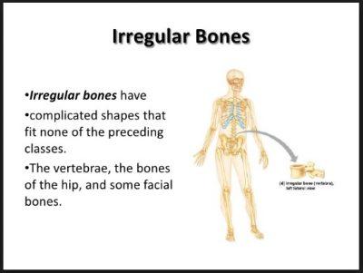 Tulang Ireguler