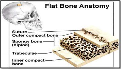 Tulang Pipih
