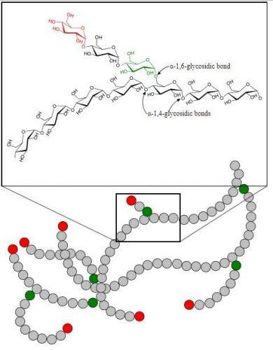 Glukogenolisis