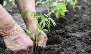 Pengertian Dan Ciri Pertanian Modern Sridianticom