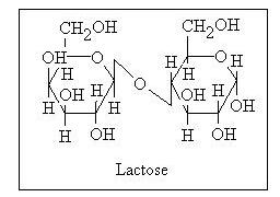 Laktosa