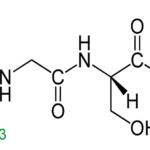contoh peptida