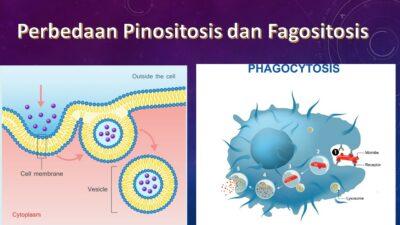 Pinositosis