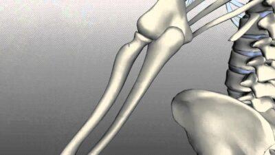 Fungsi Tulang hasta
