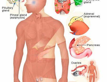 Apa itu Sistem Endokrin?