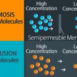 Perbedaan difusi dan osmosis