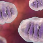 Mitokondria berfungsi sebagai gudang ion, molekul air, dan protein.
