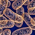 gangguan mitokondria