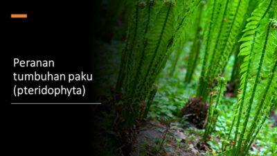 Peranan tumbuhan paku (pteridophyta)